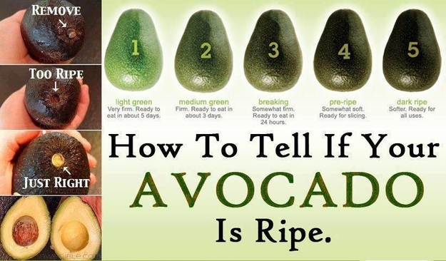 choosinganavocado