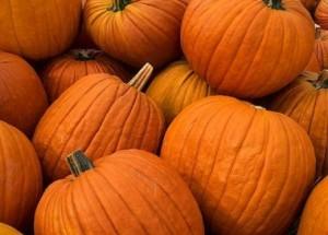 pumpkin the lil spa room